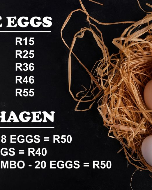 Eggs in the nest on black background. High quality photo