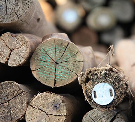 Timber@Noag's